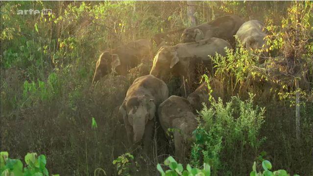 Le royaume des éléphants