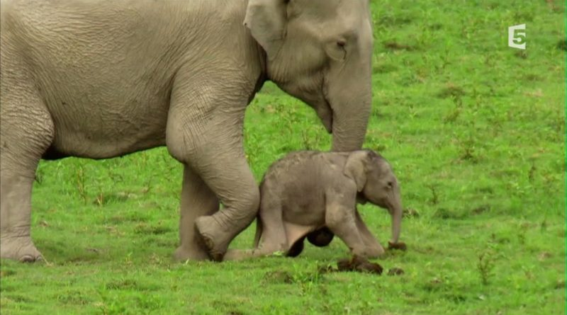 le royaume de l elephant