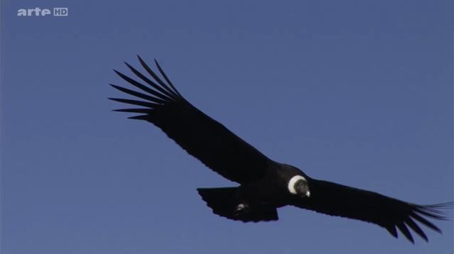 sur les ailes du condor des andes
