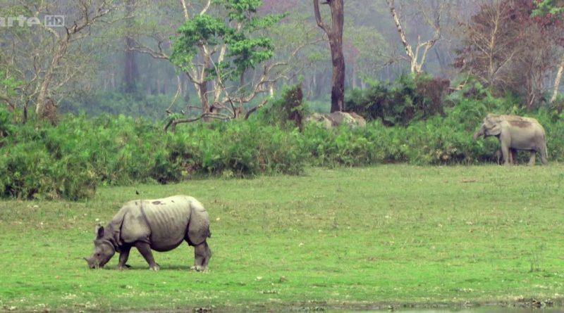 les rhinoceros