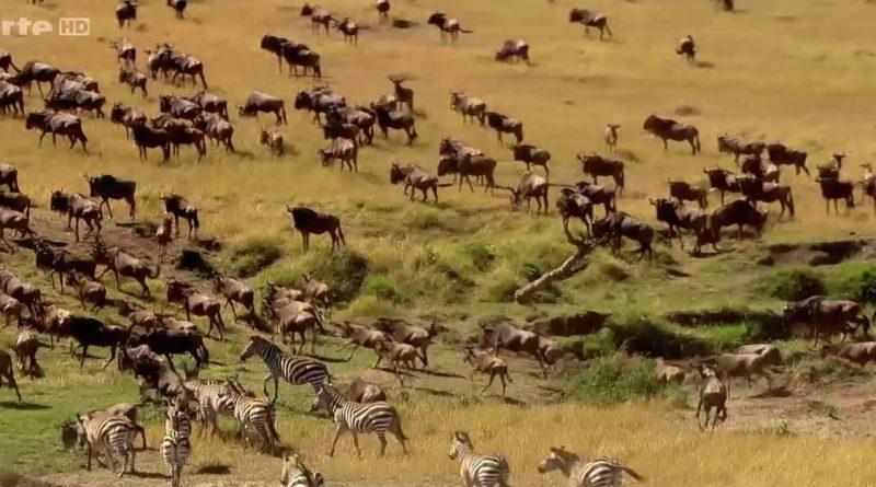 botswana la piste retrouvee des zebres