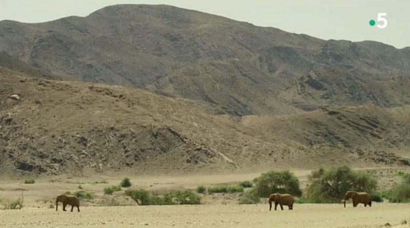 le doc sauvage le royaume du namib