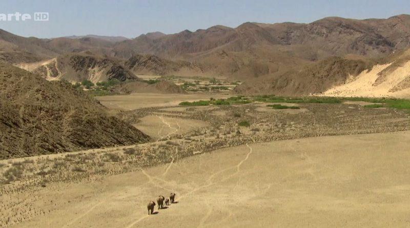 les elephants du desert