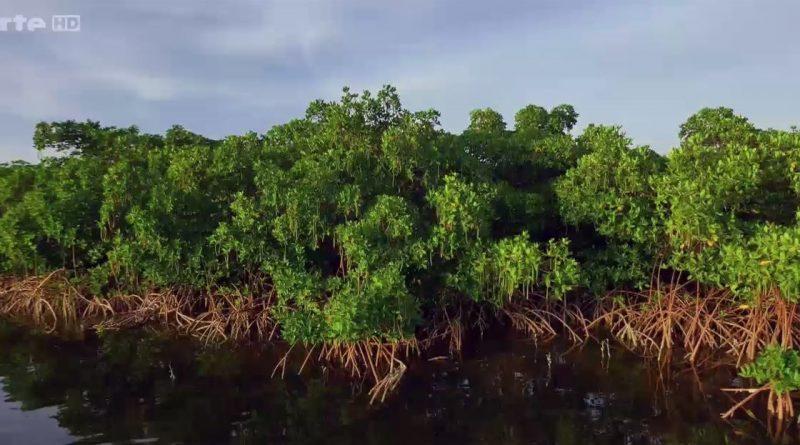 la splendeur des bahamas mangroves
