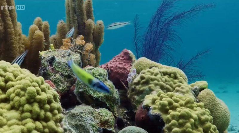 la splendeur des bahamas recifs coralliens