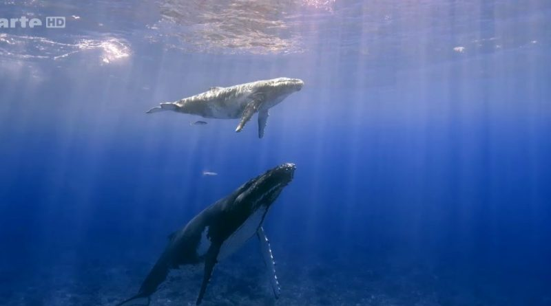aventures en terre animale la baleine a bosse de polynésie