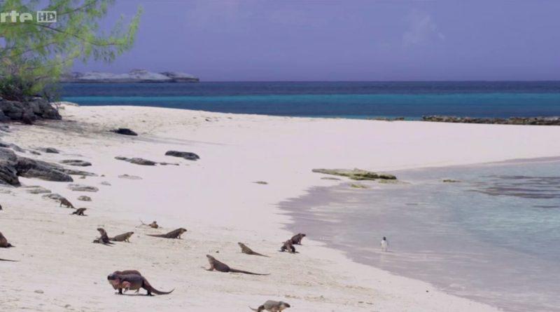 la splendeur des bahamas bancs de sable