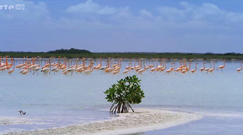 La splendeur des Bahamas Bancs de sable (vidéo)
