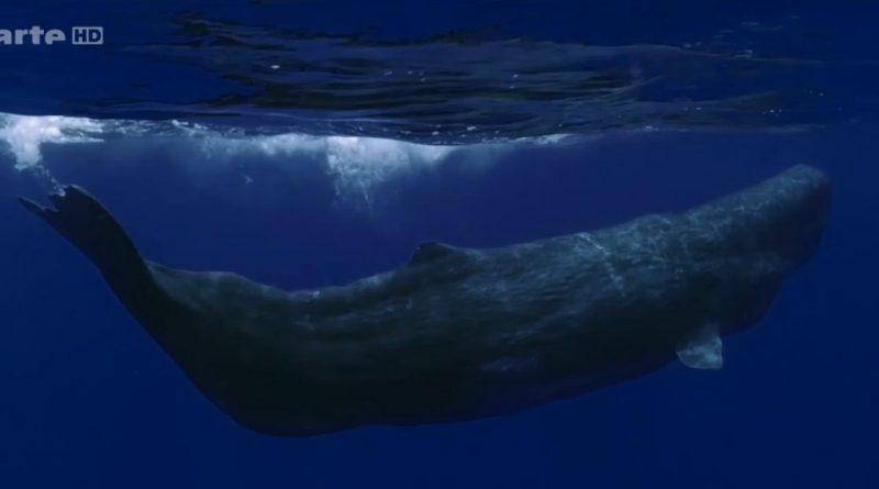 la splendeur des bahamas eaux profondes